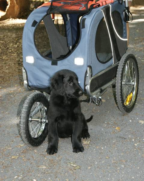 glenn_kinderwagen
