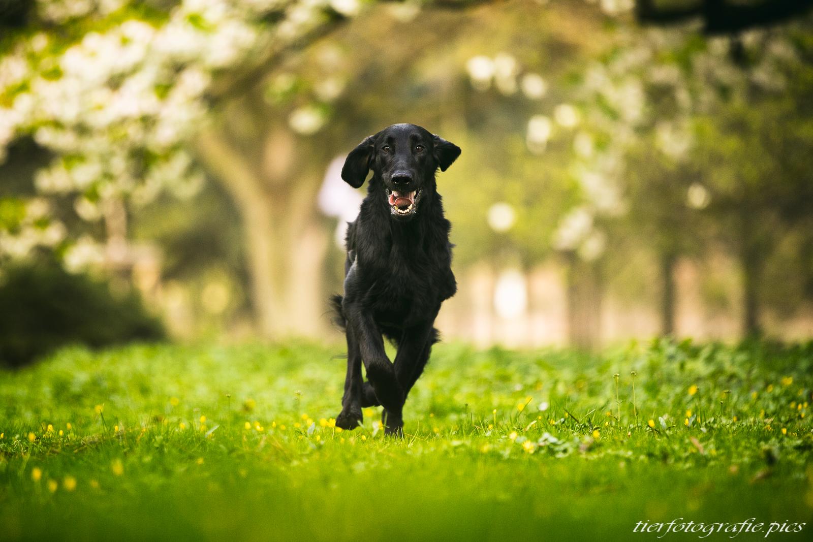 www.tierfotografie.pics