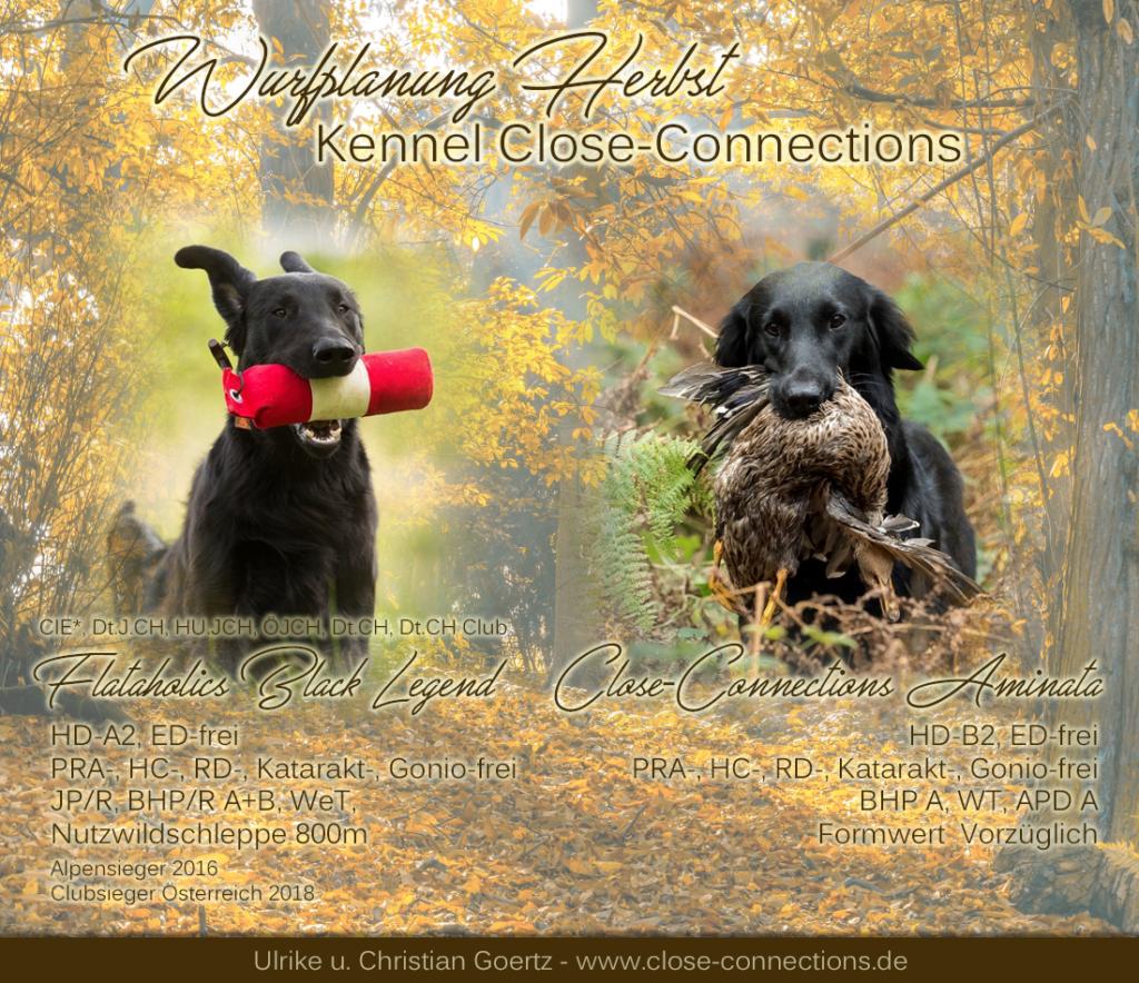 Highlandflats: Wurfplanung Im Kennel CLOSE-CONNECTIONS Bei Ulrike Und