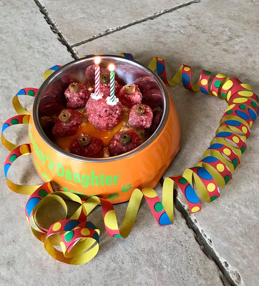 Highlandflats: HAPPY BIRTHDAY HEATHER!!! Highlandflats Flat Coated