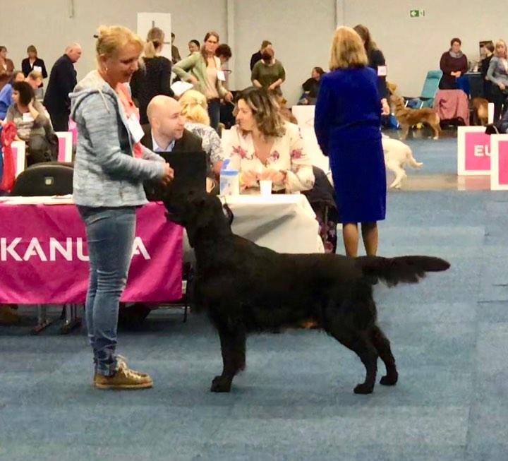 Highlandflats: Hund & Katz Dortmund, Fr Hjahrssieger-Ausstellung 2019