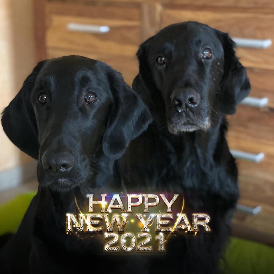 Highlandflats: Auf Ein Besseres Jahr 2021!!! Wir Sind Gespannt! HAPPY NEW